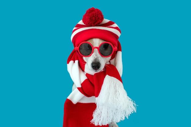 Hond in een hoed en een sjaal