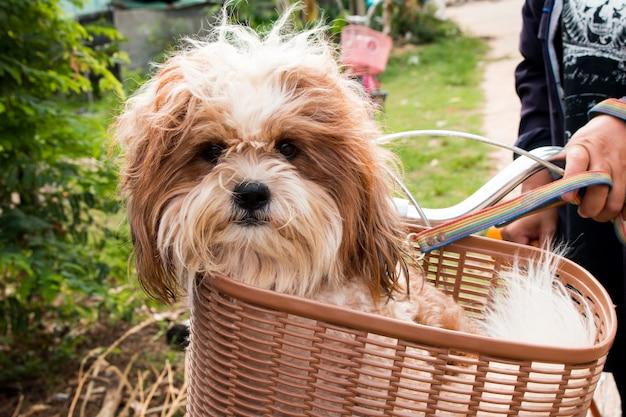 Hond in een mand op een fiets | Premium Foto