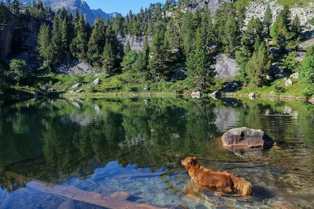 Hond in een meer
