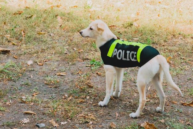 Hond in een politie-uniform in park.