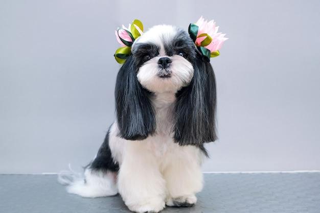 Hond in een trimsalon. huisdier krijgt schoonheidsbehandelingen in een schoonheidssalon voor honden. grijze achtergrond