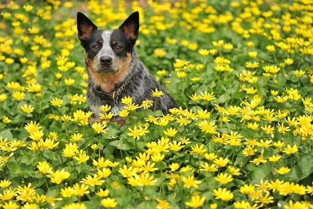 Hond in gele bloemen in de wei