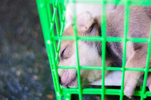 Hond in groene kooi