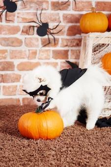 Hond in halloween-kostuum die pret met pompoen hebben