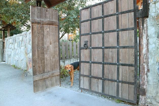 Hond in het hek van een landhuis