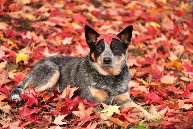 Hond in het park in de herfst