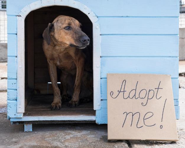 Hond in huis met adopteer me teken buiten