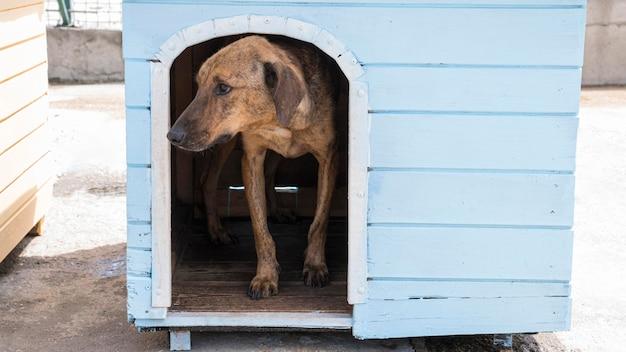 Hond in huis wacht op adoptie door iemand