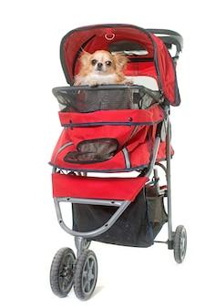 Hond in kinderwagen