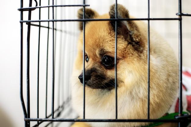 Hond in kooi bij dierenwinkel.