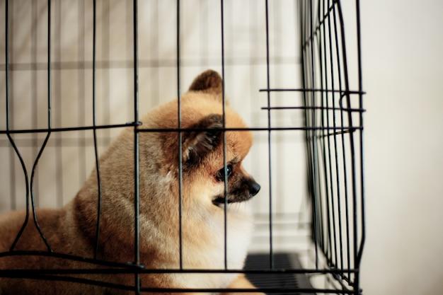 Hond in kooi met achtergrond.