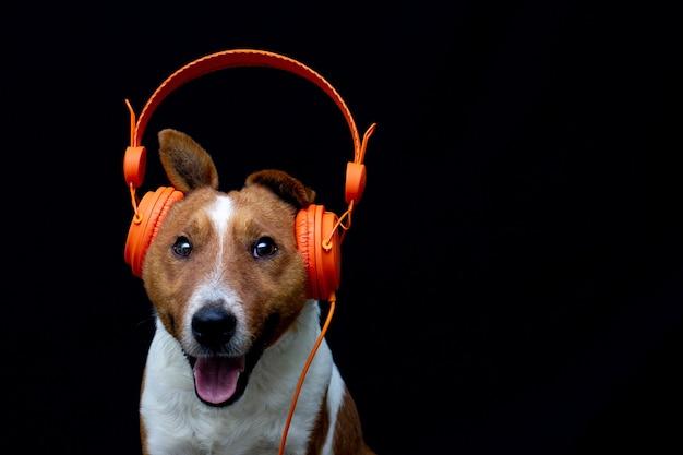 Hond in koptelefoon luisteren naar muziek. gelukkig huisdier zwarte achtergrond