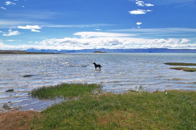 Hond in laguna nimez, el calafate, patagonië, argentinië