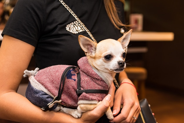 Hond in modieuze kleding op de handen van een modieus meisje