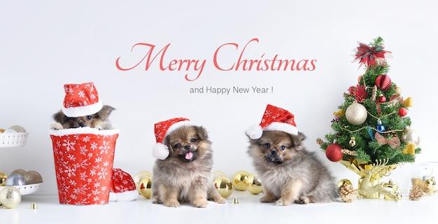 Hond in santa claus-hoed, vrolijke kerstmis en gelukkig nieuwjaar met vieringsballen