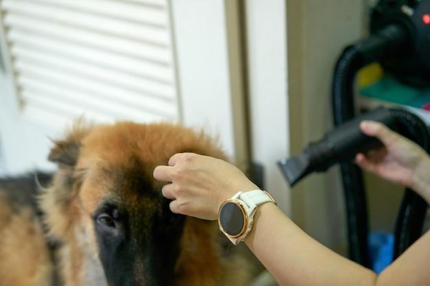 Hond in trimkamer met handdroger