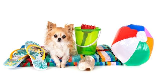 Hond in vakantie