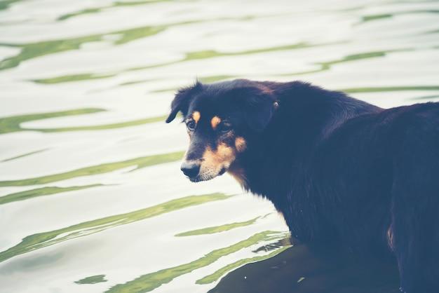 Hond in water