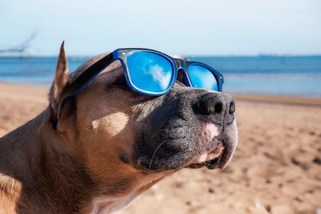 Hond in zonnebril op het strand.