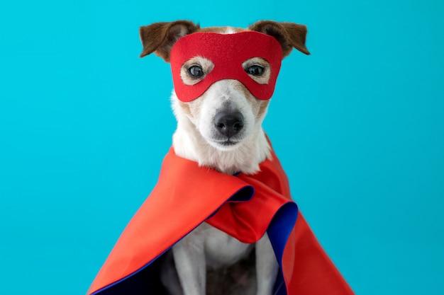 Hond jack russell superheld kostuum