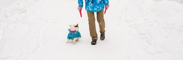 Hond jack russell terrier spelen in winter park