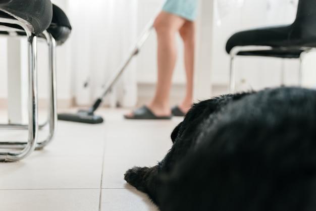 Hond kijkt naar vrouw terwijl hij het huis stofzuigt