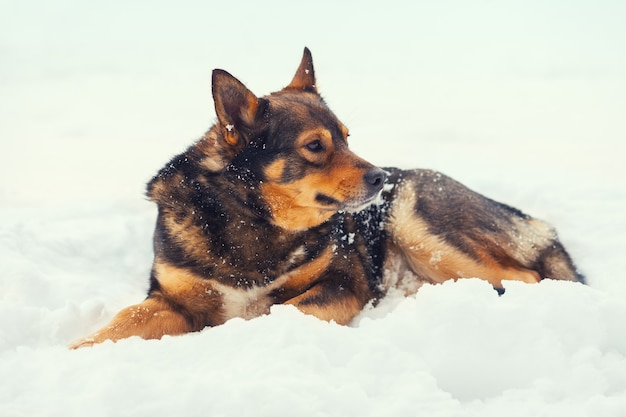 Hond liggend in de sneeuw