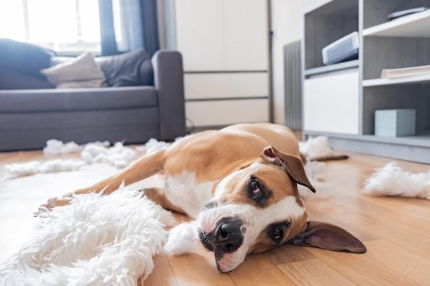 Hond ligt tussen gescheurde stukjes van een kussen in een woonkamer.
