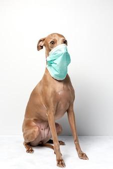 Hond met coronavirus beschermingsmasker