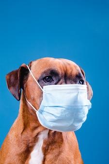 Hond met een gezichtsmasker