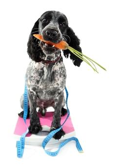 Hond met wortel op schaal, geïsoleerd op wit