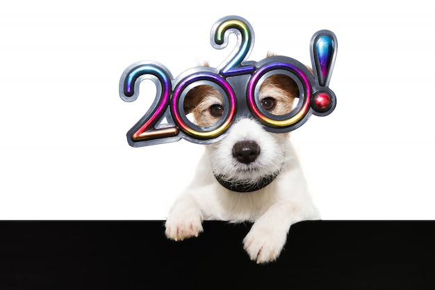 Hond nieuw jaar met poten over zwarte rand die glazen met de tekst 2020 op wit dragen