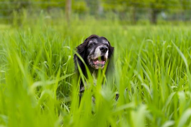 Hond omgeven door het groene gras van het park