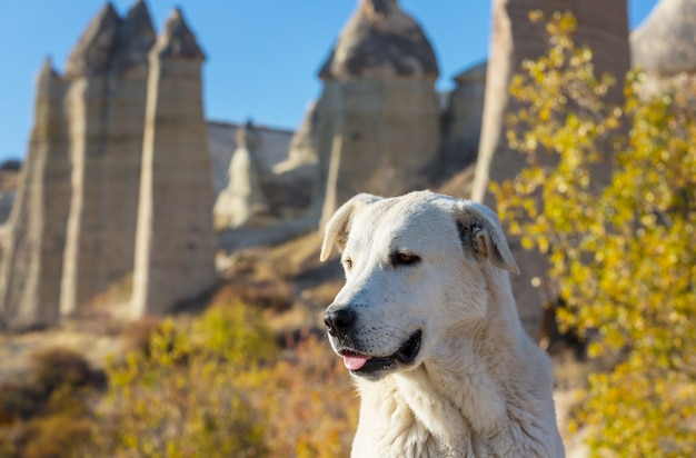 Hond onder beroemde zandsteenformaties van cappadocië, turkije