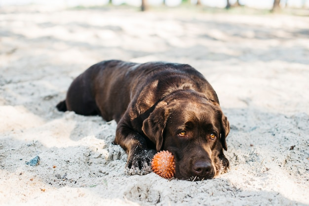 Hond ontspannen op het strand