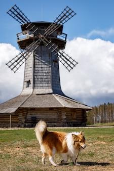 Hond op achtergrond van dorps houten molen.