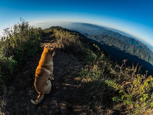 Hond op de heuvel