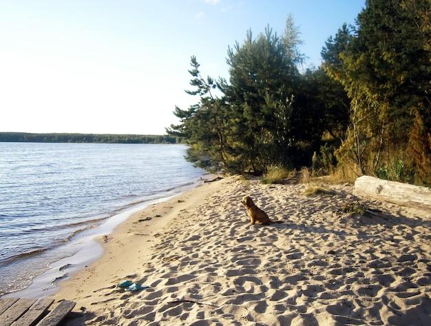 Hond op de oever van de rivier wachtend op de eigenaren