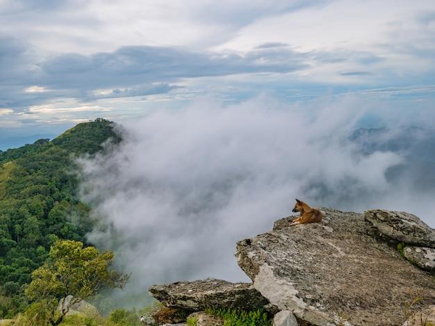 Hond op de rotsachtige klif met foggy of mist tussen de berg op khao luang berg in ramkhamhaeng national park, sukhothai provincie thailand