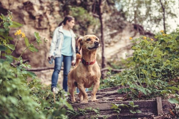 Hond op een bospad