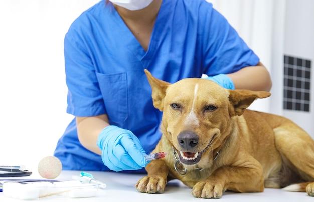Hond op onderzoekstafel van dierenarts kliniek