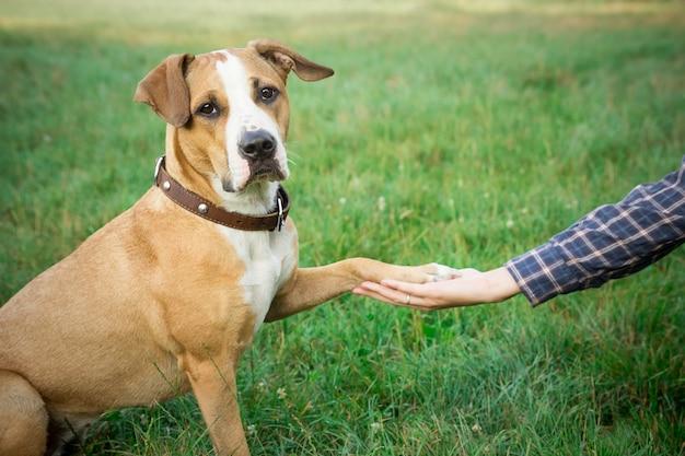 Hond poot geven