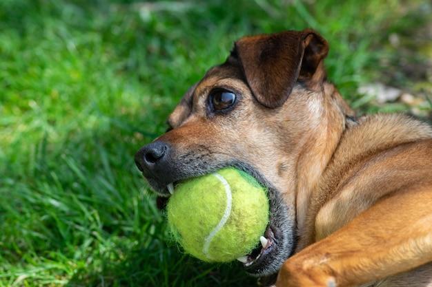 Hond speelt met een bal