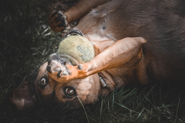 Hond spelen met een bal