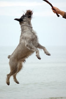 Hond springen