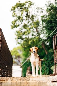 Hond staat bovenop de trap