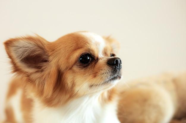 Hond van schattige thuis.