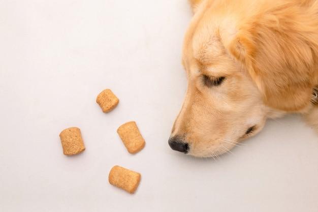 Hond verveeld met eten of ziek concept. bruine hond die op de vloer legt en aan hond behandelt. bovenaanzicht