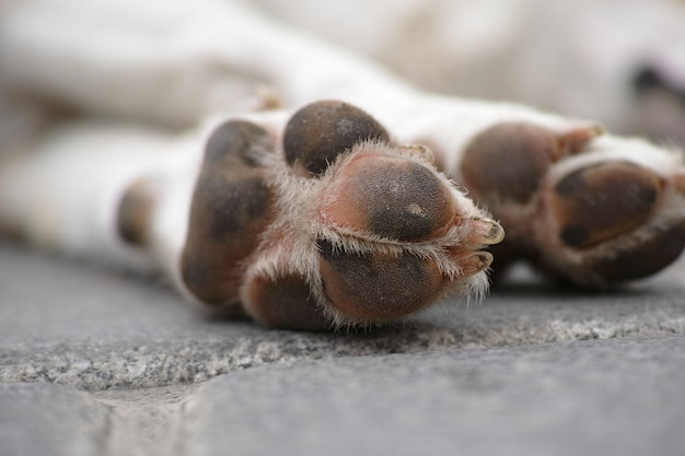 Hond voeten in de straat