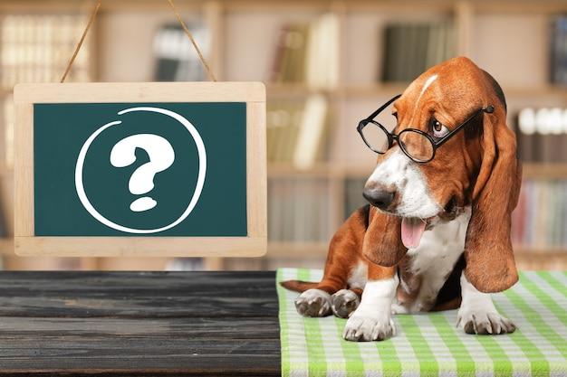 Hond vraagteken doordacht advies dierlijke antwoorden